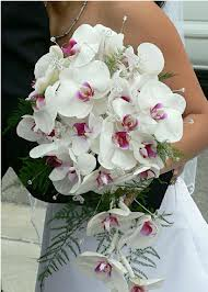 Bouquet Sposa Orchidea Bianca.Significato Dei Fiori Prima Parte Quasi Sposiquasi Sposi